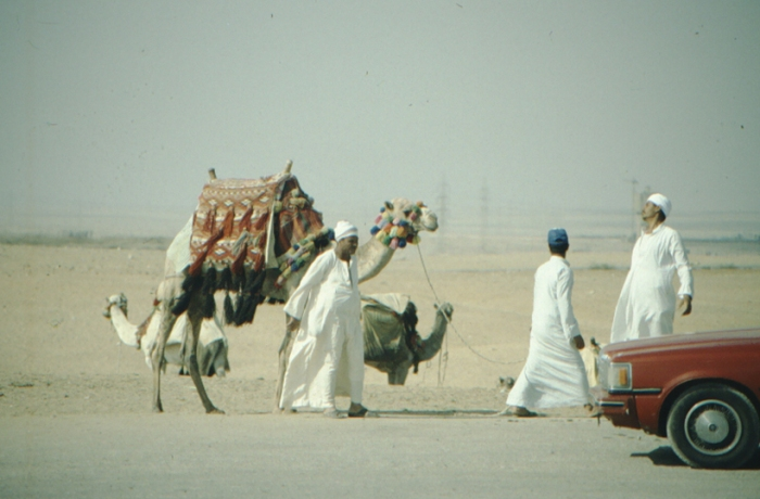 Cheops pyramid, riding camel