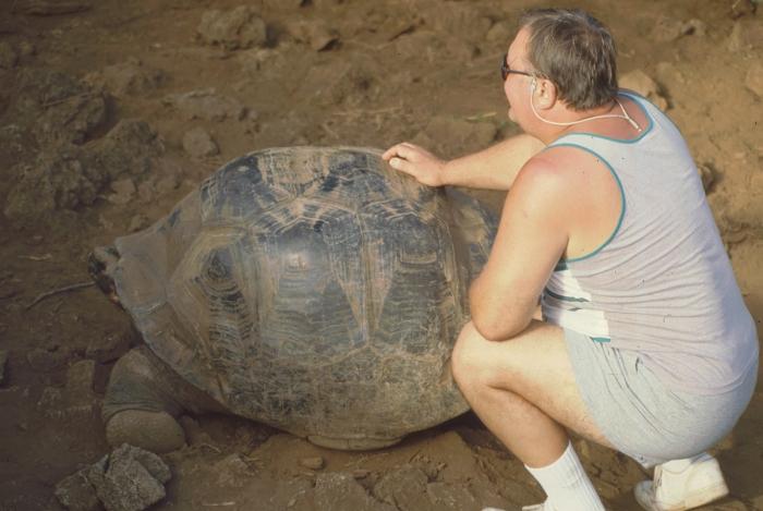 Giant tortoise, Darwin Station, Galapagos